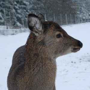 kalb-winter-portrait