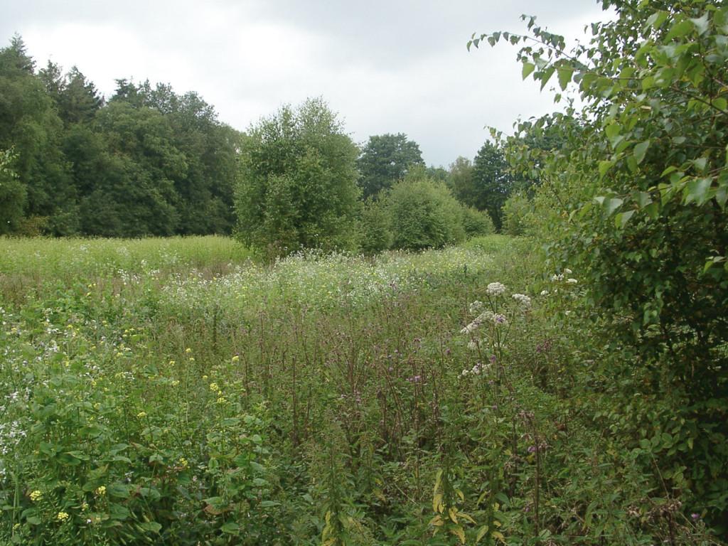Moorland im Barghorner Moor